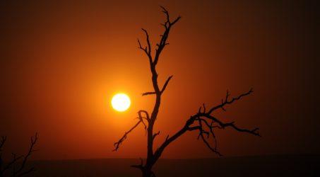 SUD AFRICA – SAFARI AFRICANO ACCESSIBILE IN CARROZZINA